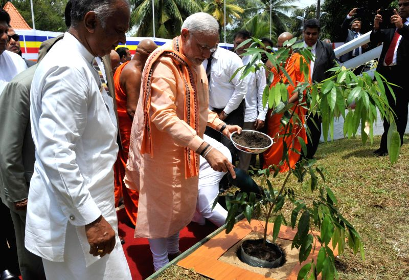 Prime Minister Narendra Modi plants a sapling during his visit to the Mahabodhi Society in Colombo, Sri Lanka on March 13, 2015. - Narendra Modi