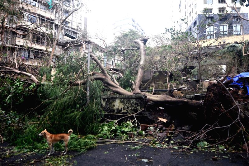 Cyclone Tauktae brings record May rains, leaves trail of destruction in Maha (Lead)  18 May 2021 (Photo : Sandeep Mahankal/ IANS)