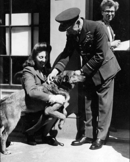 "D-Day participant, Paradog Bing being conferred the Dickin Medal - the ""animals\' Victoria Cross\"" for his war service"