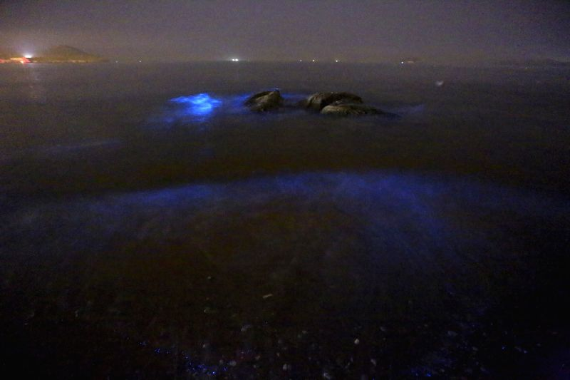 Blue fluorescence is seen in the seawater in Dalian, northeast China's Liaoning province, April 28, 2014. Large amount of marine microbe falgellates have been ...