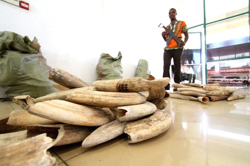 DAR ES SALAAM, Jan. 30, 2018 - An officer guards beside piles of hippo teeth at the headquarters of the Ministry of Natural Resources and Tourism in Dar es Salaam, Tanzania, on Jan. 29, 2018. A ...