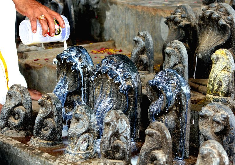 Devotees offer milk to Nag Devta to celebrate the festival of Nag Panchami