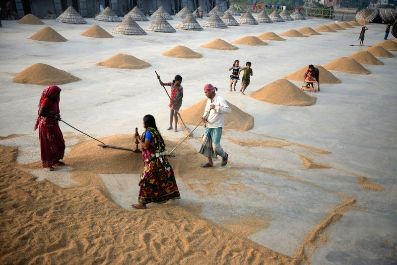 Bangladeshi farmers dry the paddy at a rice mill on the outskirts of Dhaka, Bangladesh, Dec. 11, 2014. Every year farmers were busy with newly collected paddy during the harvest season. ...