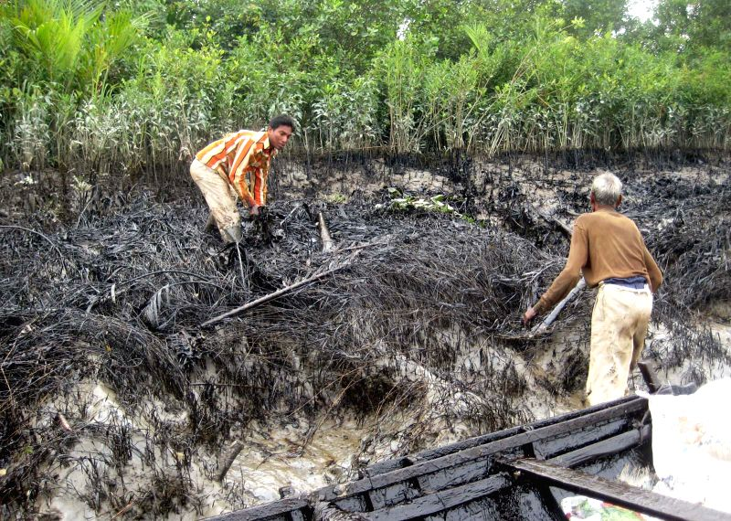 Local people work to remove the layer of oil on the mangrove forest in the Shela River in Bangladesh, on Dec. 13, 2014. A 50-km oil slick coated the Shela River ...
