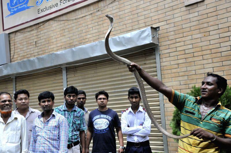 A Bangladeshi snake charmer shows one of his snakes on a street in Dhaka, Bangladesh, Sept. 3, 2014.