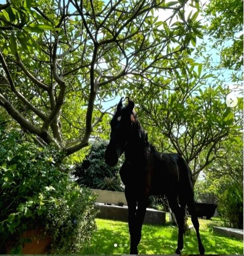 Dhoni brings home a stallion, names him Chetak