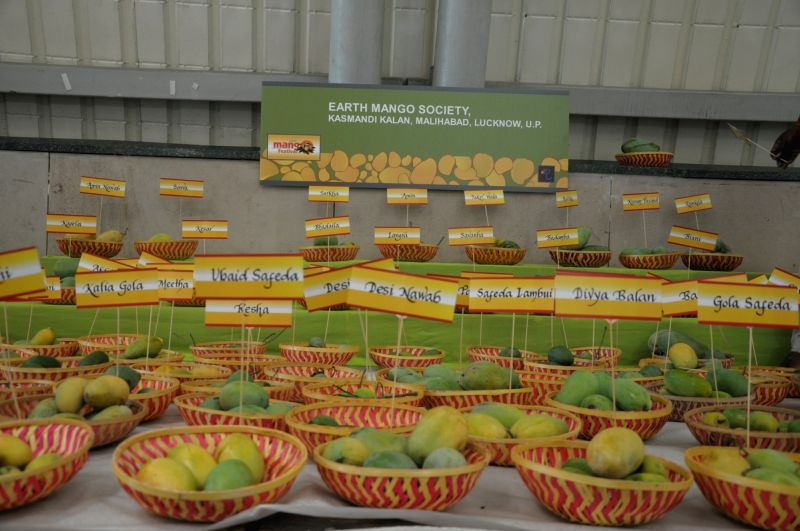Different varieties of mangoes exhibited at the ongoing Mango Festival, in New Delhi, on July 6, 2018.