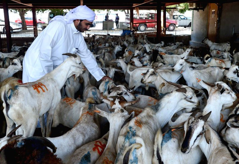 DOHA, Aug. 31, 2017 - People visit a livestock market to buy animals for the upcoming Eid al-Adha festival in Doha, Capital of Qatar, Aug. 3, 2017.