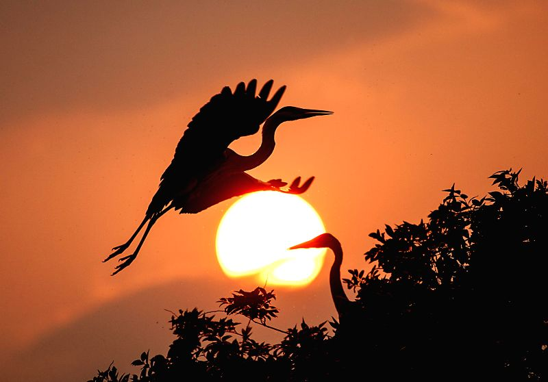 An egret flies against the setting sun beside the Sushanxie Lake in Duchang County, east China's Jiangxi Province, April 17, 2014.