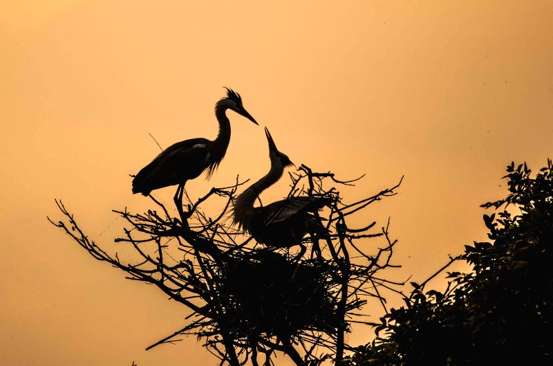 Two egrets are seen beside the Sushanxie Lake in Duchang County, east China's Jiangxi Province, April 17, 2014.