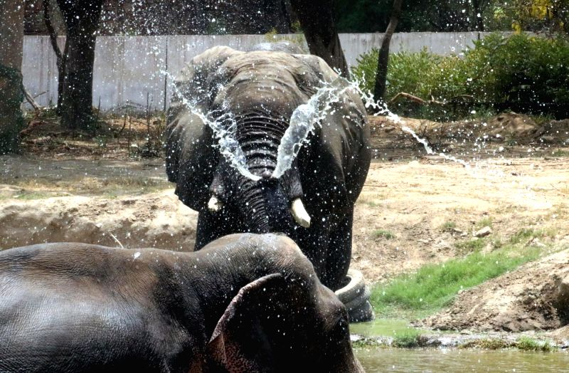 Elephants beat the heat on a hot day at Delhi zoo on May 22, 2016.