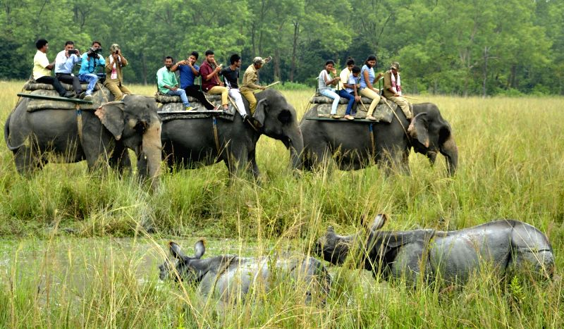 Elephants carry tourists at the Pobitora Wildlife Sanctuary in Morigaon district of Assam on Oct 2, 2017. Also seen Indian one-horned rhinos.