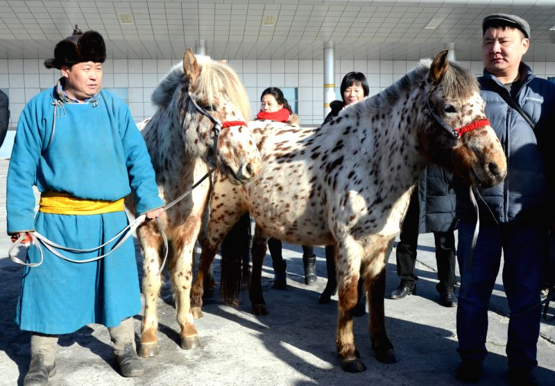 """Horses """"Altay"""" (L) and """"Cherlen"""" arrive in China through the port of entry in Erenhot, north China's Inner Mongolia Autonomous Region, Feb. 12, ."""