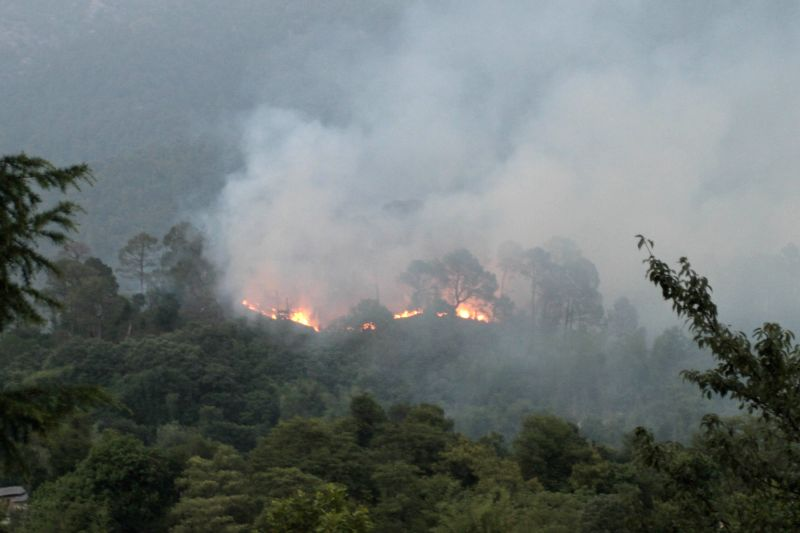 Fire breaks out in Pine Forest near Palampur town  on June 4, 2017.