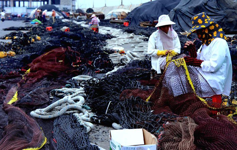 Fishermen mend nets after rainstorms at the Shenhu fishing port in Jinjiang of Quanzhou city, southeast China's Fujian Provincem, Aug. 9, 2015. Typhoon Soudelor ...