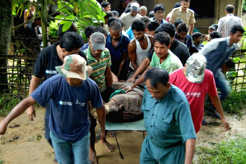 Forest officials rescue a baby Rhino at Majline near Kohora range of Kaziranga National Park on July 26, 2016.