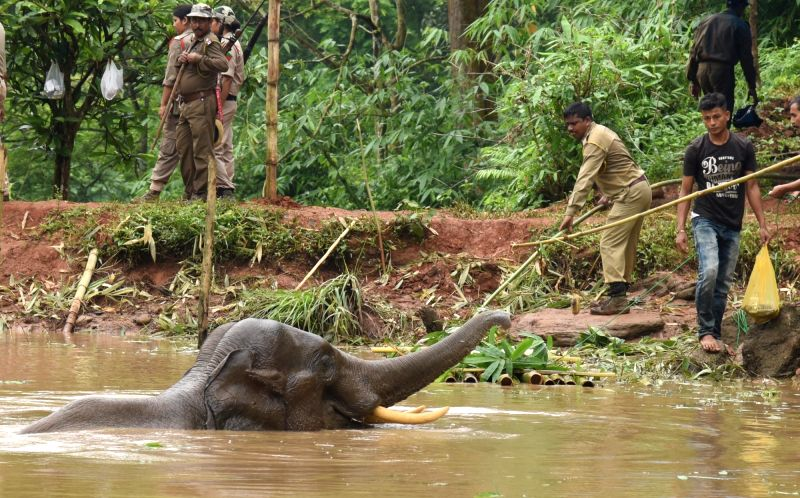 Forest officials rescue an injured elephant from a pond in Amchang Wildlife Sanctuary near Guwahati on May 24, 2017.