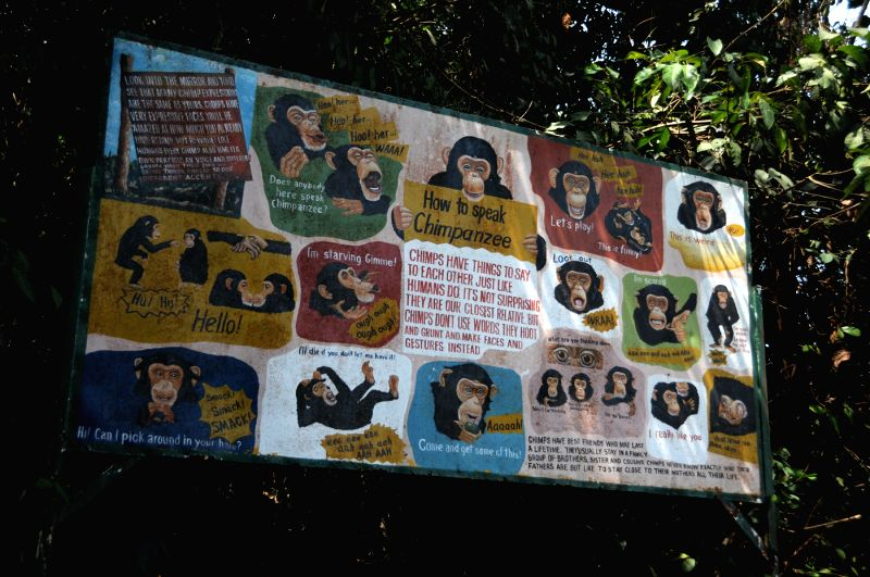 "The bulletin board shows various kinds of chimpanzee's ""language"" in the form of comics in Tacugama Chimpanzee Sanctuary of Sierra Leone, April 28, ..."