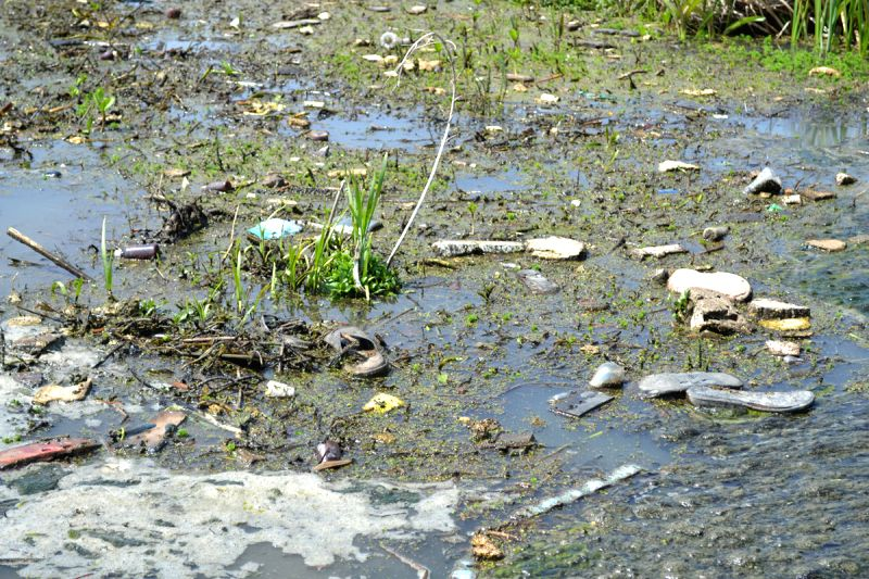 From wetland to wasteland: Srinagar? Hokarsar has become a dumping pit for the city (IANS Photo/Javaid Trali)