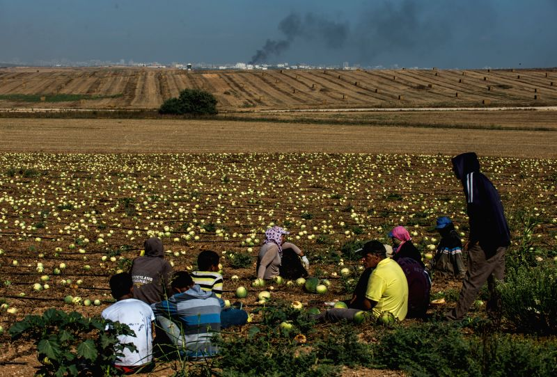 Israeli farmers rest in the field in southern Israel near the border with Gaza while smoke rises in northern Gaza Strip, on July 30, 2014. The Israel Defense ...