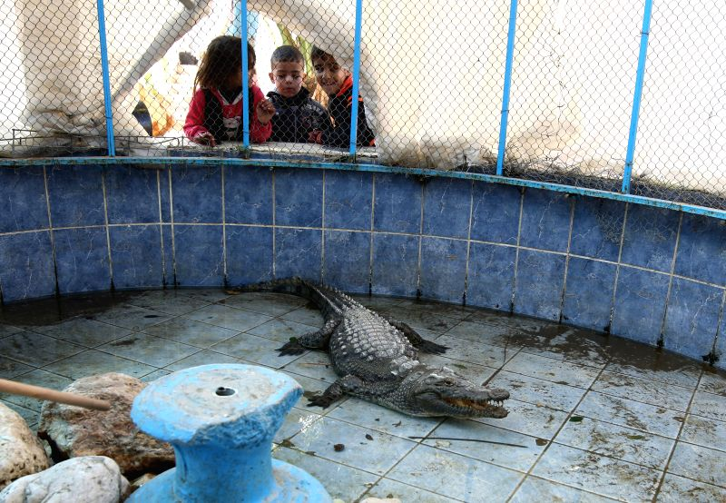GAZA, Jan. 4, 2017 - Palestinian children watch a crocodile at Rafah Zoo in the southern Gaza Strip city of Rafah, on Jan. 4, 2017. Gaza's first zoo Rafah Zoo which was established 17 years ago faces ...