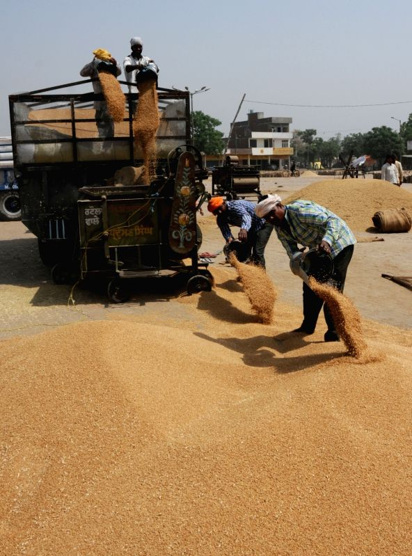 Grain Market   (File Photo: IANS)