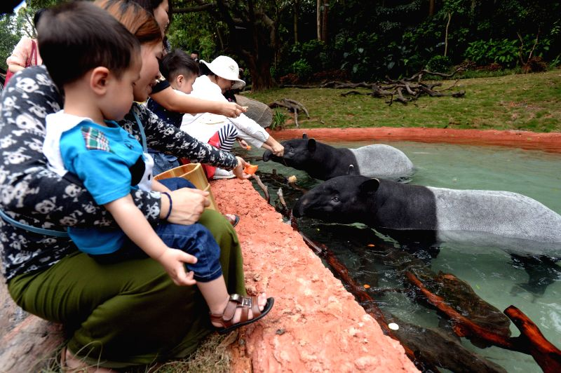 Tourists feed Malayan tapirs at the Chimelong Safari Park in Guangzhou, capital of south China's Guangdong Province, April 29, 2014. Three Malayan tapirs have ...