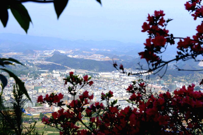 Azaleas blossom on the Longqian mountain, Danzhai County, southwest China's Guizhou Province, May 2, 2014. Many tourists climbed up the mountain to view azaleas on ...