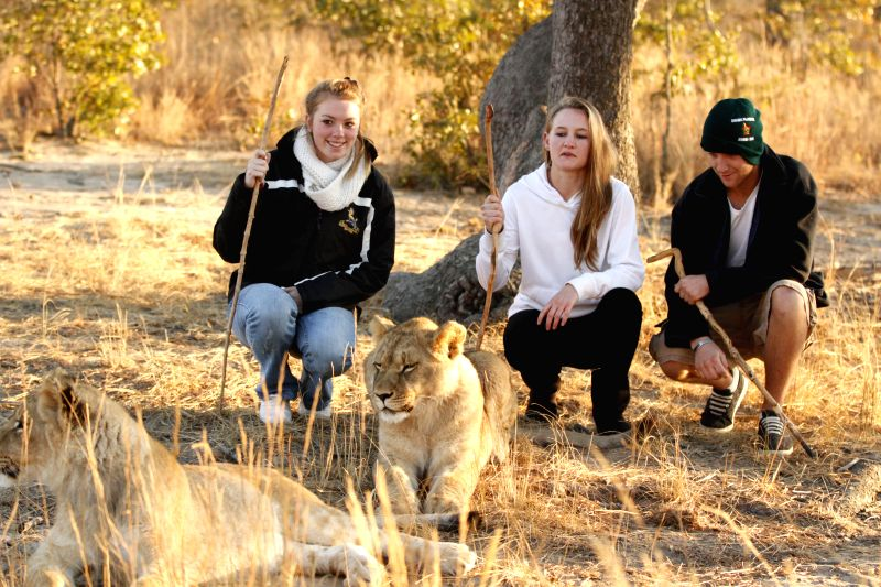 Foreign tourists pose for photos with two lion cubs at Antelope Park, in Gweru, Zimbabwe, July 6, 2014. Lion walk was introduced to Antelope Park over a decade ago as .