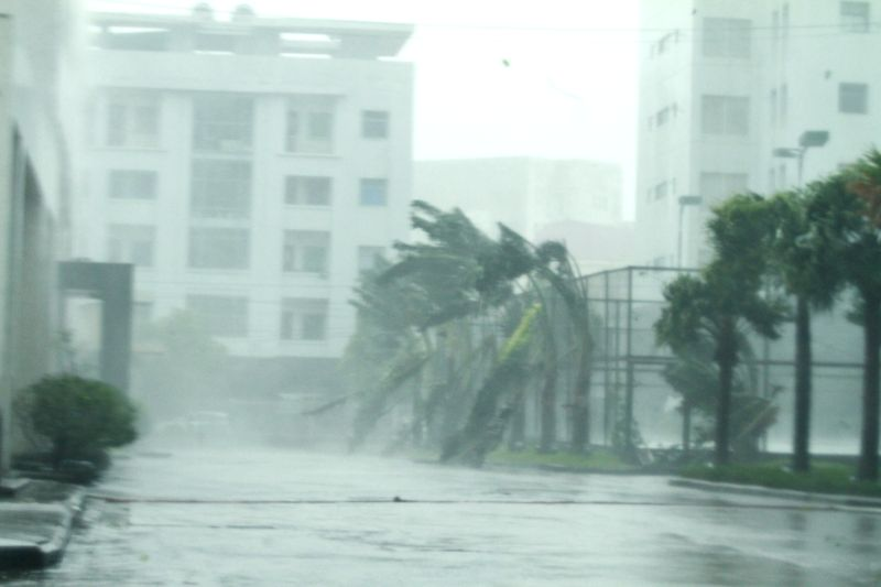 Photo taken on July 19, 2014 shows trees in heavy rain and wind under the impact of typhoon Rammasun in Mong Cai city, Quang Ninh province, Vietnam. Two houses were ..