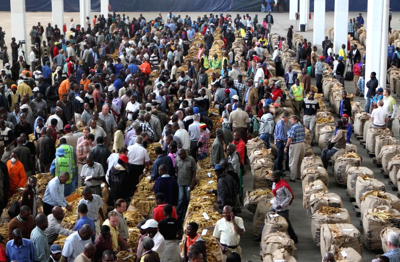Tobacco traders and farmers swarm the Boka Tobacco Auction Floors in Harare, Zimbabwe, March 4, 2015. The 2015 tobacco selling season started with chaos Wednesday as ...