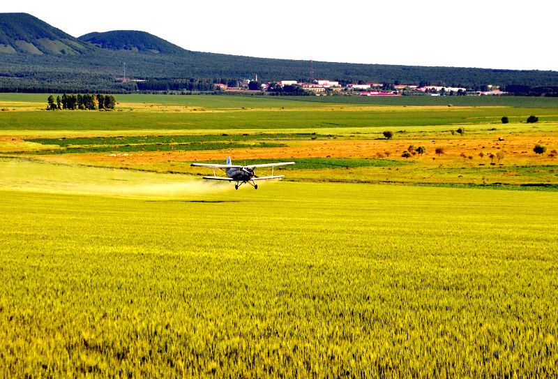 A plane sprays nutrient solution on wheat at the Wudalianchi Farm in Heihe, northeast China's Heilongjiang Province, July 7, 2014.
