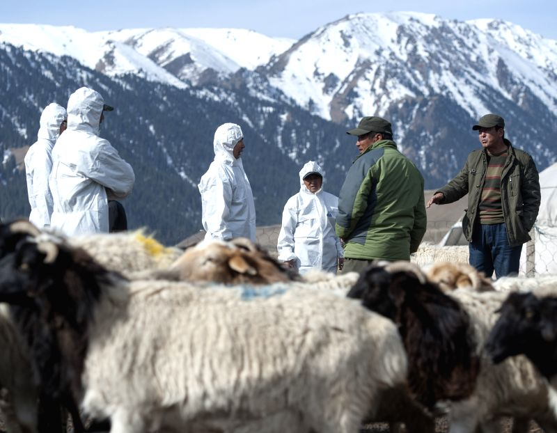 Herdswoman Caicai looks at a little lamb less than one hour-old in Hejing County, Mongolian Autonomous Prefecture of Bayingolin, northwest China's Xinjiang Uygur ...