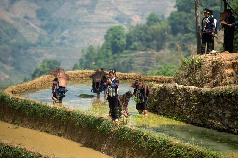 HONGHE, April 26, 2017 - People attend a rice transplanting ceremony in the terrace field in Shanpu village of Azhahe township in Honghe, southwest China's Yunnan Province, April 26, 2017. The ...