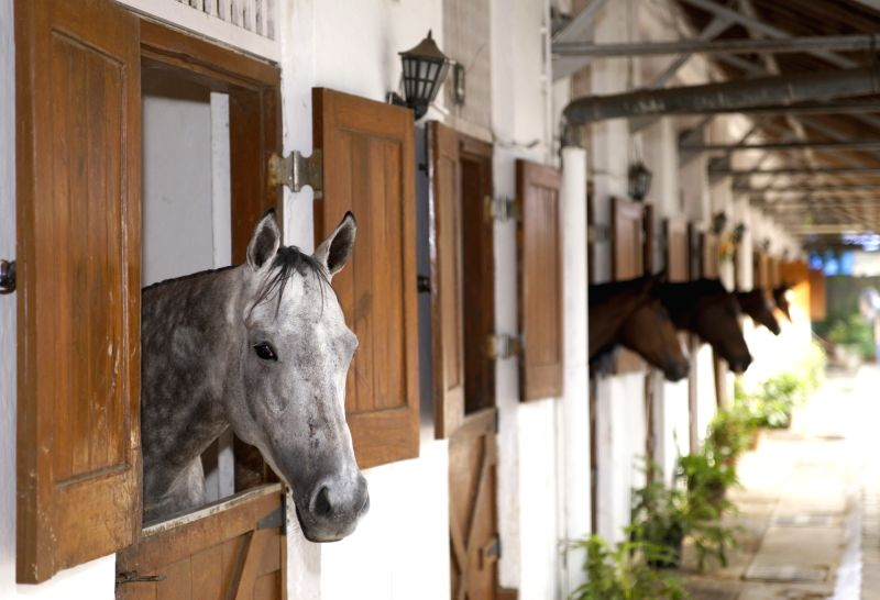 Horses in their permanent stables at ARC.