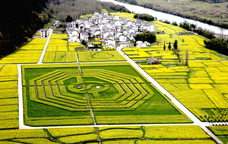 """Photo taken on March 24, 2015 shows a field of rape flowers in the shape of """"bagua"""" or Eight Trigrams, the eight combinations of three whole or broken ..."""