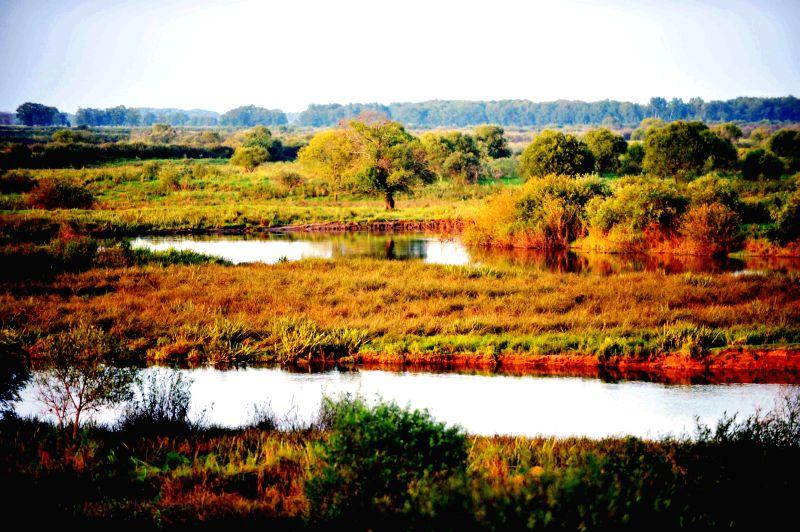 Photo taken on Aug. 15, 2014 shows the scenery of the wetland on Zhenbao Island in Hulin, northeast China's Heilongjiang Province. Zhenbao Island, which means rare ...