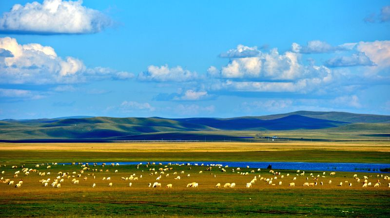 Photo taken on Aug. 21, 2014 shows the scenery on the grassland of Hulun Buir, north China's Inner Mongolia Autonomous Region.