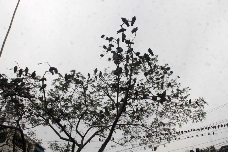 A cloudy sky in Hyderabad on April 11, 2015.