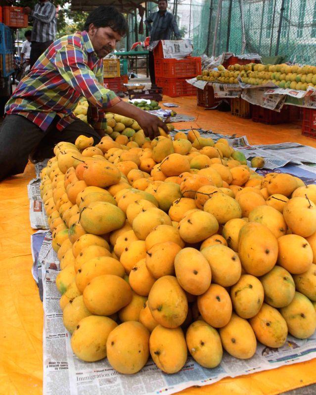 Banginapally mangoes arrive in Hyderabad markets.