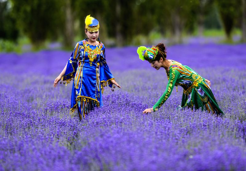 Local women enjoy the lavender fields in Huocheng County of Kazak Autonomous Prefecture of Ili, northwest China's Xinjiang Uygur Autonomous Region, June 20, 2014. Over .