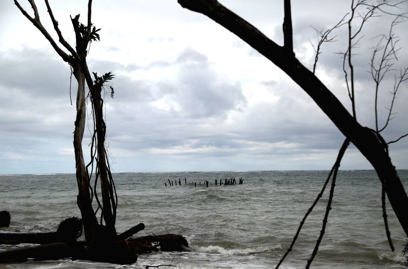 Image taken on Nov. 24, 2015 shows dead trees and an abandoned dock on a beach of Cahuita National Park, in Limon Province, southern Costa Rica. According to the ...