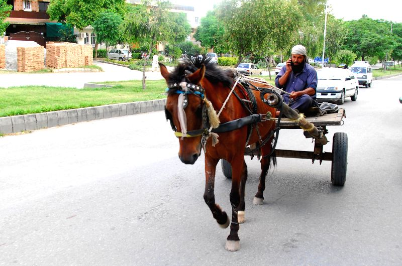 A laborer talks on his cell phone while sitting on his horse cart on World Telecommunication and Information Society Day in Islamabad, capital of Pakistan on May ..