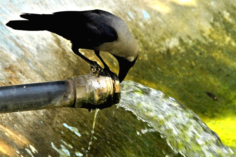 ISLAMABAD, May 27, 2017 - A crow drinks water from a leaked water pipeline during heat wave in Islamabad, capital of Pakistan, on May 27, 2017. Temperature reached over 45 degrees Celsius in many ...