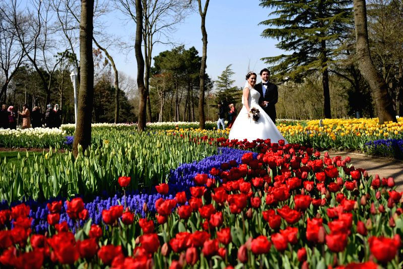 A couple has wedding photo taken at Emirgan Park in Istanbul, Turkey, April 11, 2015. The annual Istanbul International Tulip Festival comes usually in April and ...