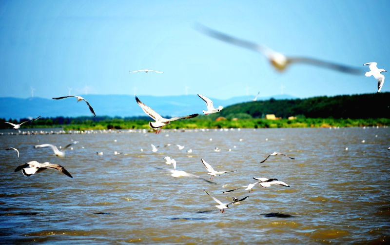 Birds fly over the Xingkai Lake in Jixi, northeast China's Heilongjiang Province, Aug. 13, 2014. The Xingkai Lake has an area of more than 4,300 square kilometers with