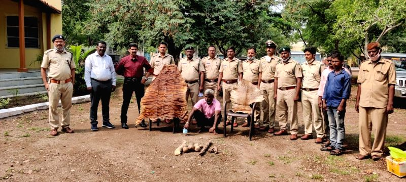 K'taka forest officials raid astrologer's house, seize tiger skin, claws.