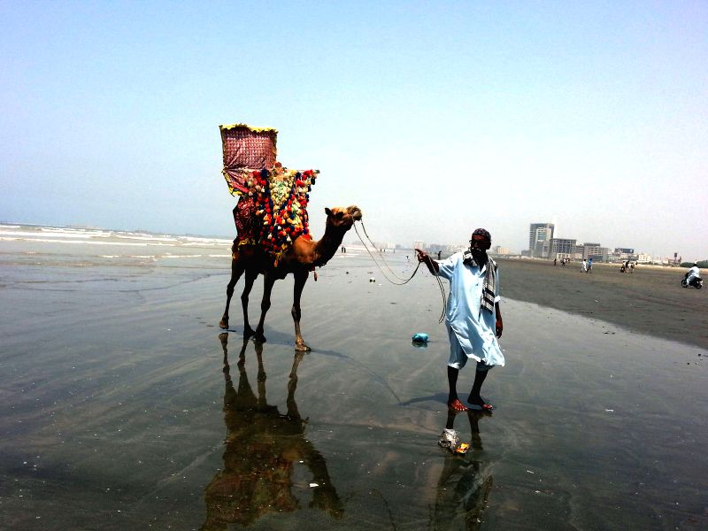 A camel owner waits for customers on Clifton beach in southern Pakistani port city of Karachi, May 10, 2014.
