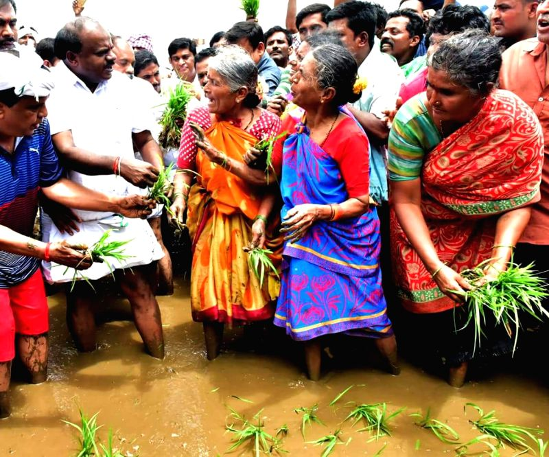 Karnataka Chief Minister HD Kumaraswamy along with farmers transplants the first paddy crop of the monsoon season at the Sitapura village in the Mandya district of Karnataka on Aug 11, 2018. - H