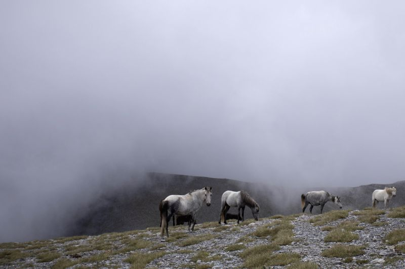 KATERINI (GREECE), Aug. 9, 2018 Photo taken on Aug. 8, 2018 shows wild horses in the alpine zone of Mount Olympus, northern Greece. Mount Olympus is the highest mountain in Greece with ...